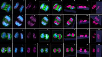 Imágenes de células madre hematopoyéticas (HSC) de Carolina Florian. Florian et al. PLoS Biol. 2018