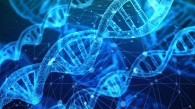 A veces, mutaciones en el ADN provocan cambios sutiles en el funcionamiento de una proteína, pero otras dan lugar a cambios en la forma en la que la célula se comporta (Imagen de Gerald en Pixabay).