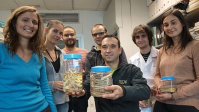 reptiles, evolution, adaptation, genetic adaptation, Institute for Evolutionary Biology (IBE: CSIC-UPF)