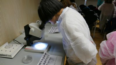 Student looking at the zebrafish embryos through the microscope.