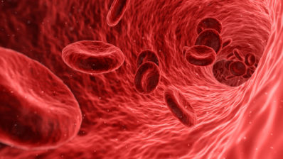 Erythrocytes are the majority of the blood cells, and give the blood its red colour. In leukemia, the proportions of blood cells are reversed.