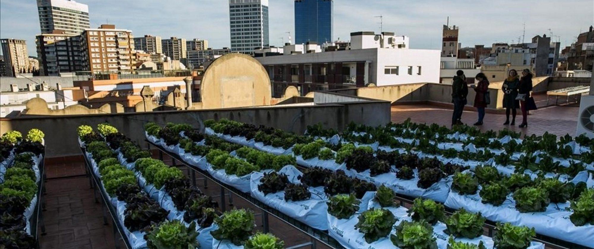 Ejemplo de agricultura urbana en una azotea de un edificio de la ciudad de Barcelona.