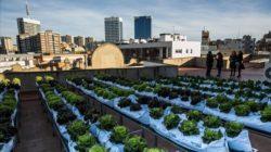 Exemple d'agricultura urbana a un terrat d'un edifici de la ciutat de Barcelona.
