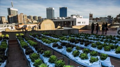 Example of urban gardening in the rooftop of a building in Barcelona.