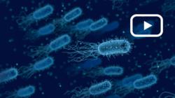 """El """"quorum sensing"""", un tipo de comunicación bacteriana, consiste en la regulación de la expresión génica en respuesta a fluctuaciones en la densidad poblacional de los microorganismos (Imagen de qimono en Pixabay)."""