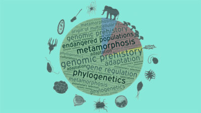 The Institute of Evolutionary Biology covers a wide range of topics. Adapted from a figure by Iñaki Ruiz-Trillo.