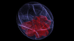 Mouse blastocyst stage embryo. Credit Agnieszka Jedrusik and Magdalena Zernicka-Goetz, Gurdon Institute. CC0
