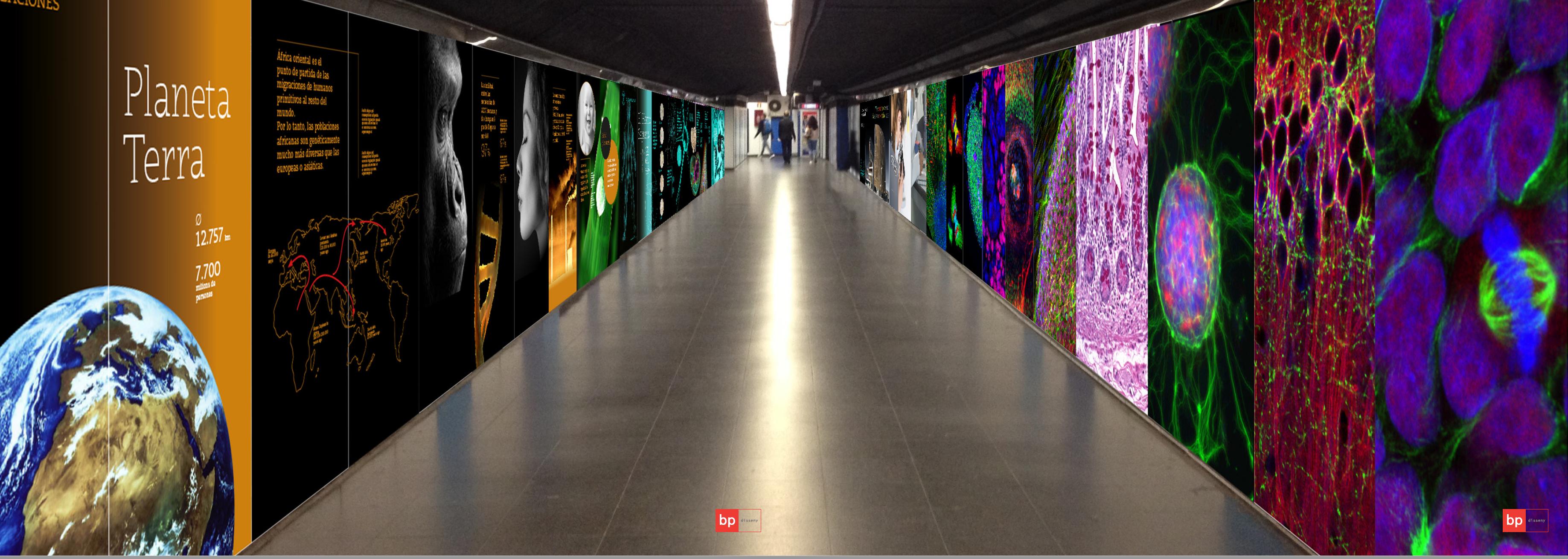 La mostra ha convertit el passadís del metro de Ciutadella / Vila Olímpica en un passeig per la biologia humana.