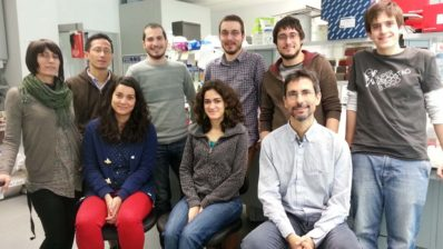 Members of the Multicellular Genome lab at the Institute for Evolutionary Biology (IBE: CSIC-UPF).