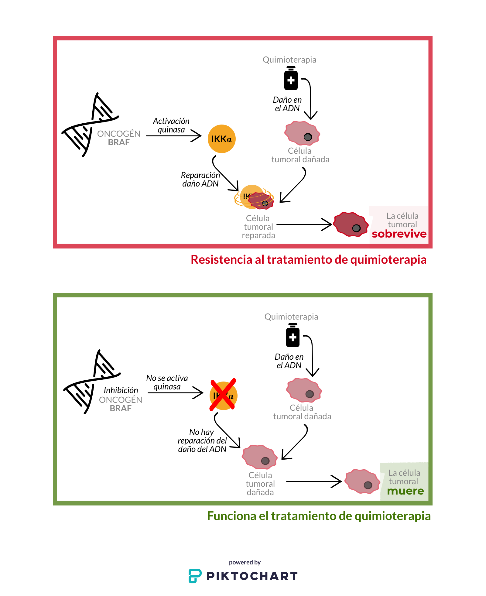 Papel de la proteína IKKα en el progreso de un cáncer agresivo