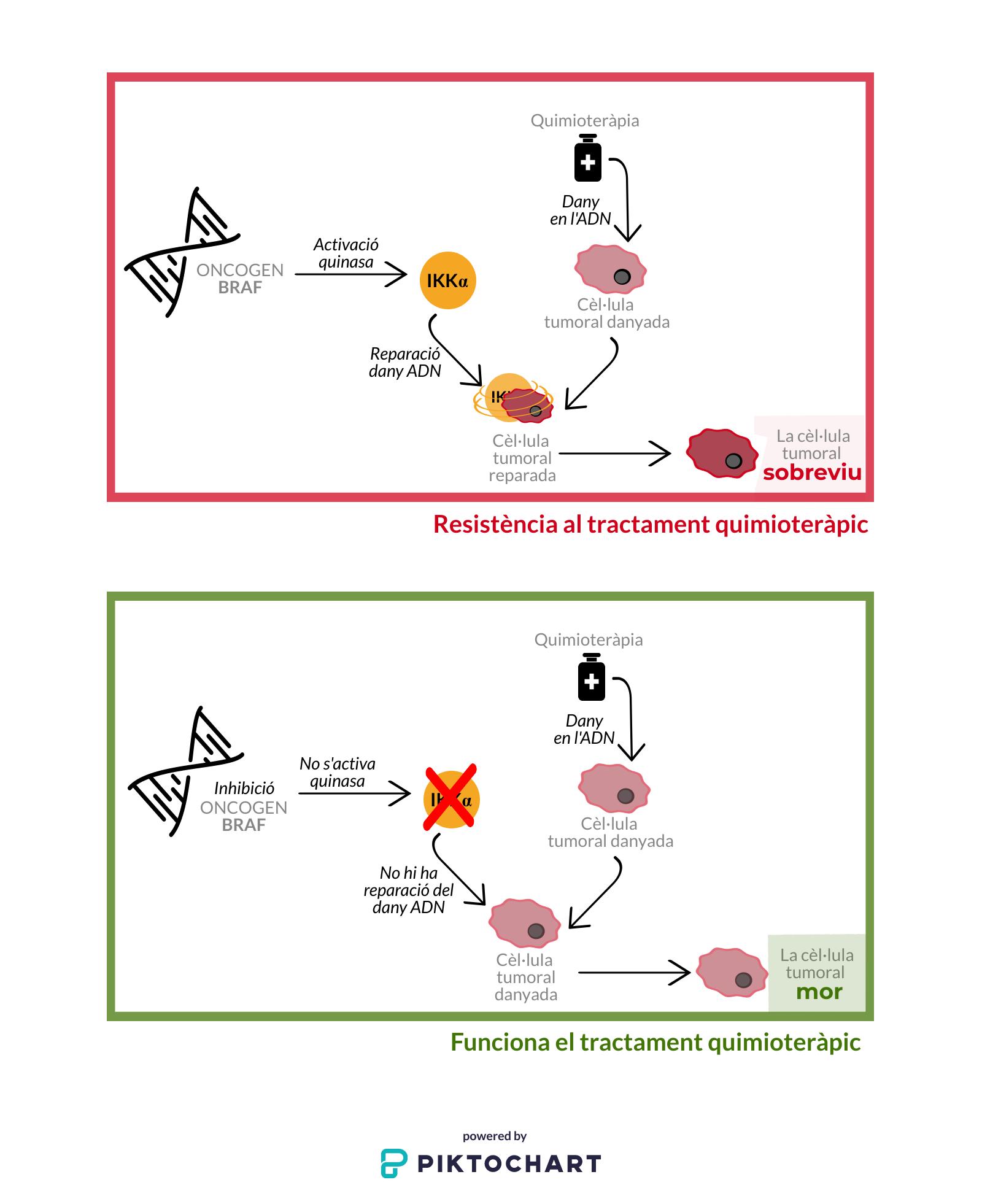 Paper de la proteïna IKKα en el progrés d'un càncer agressiu