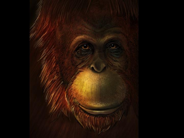 Representació artística de Gigantopithecus blacki. Crèdit: Ikumi Kayama
