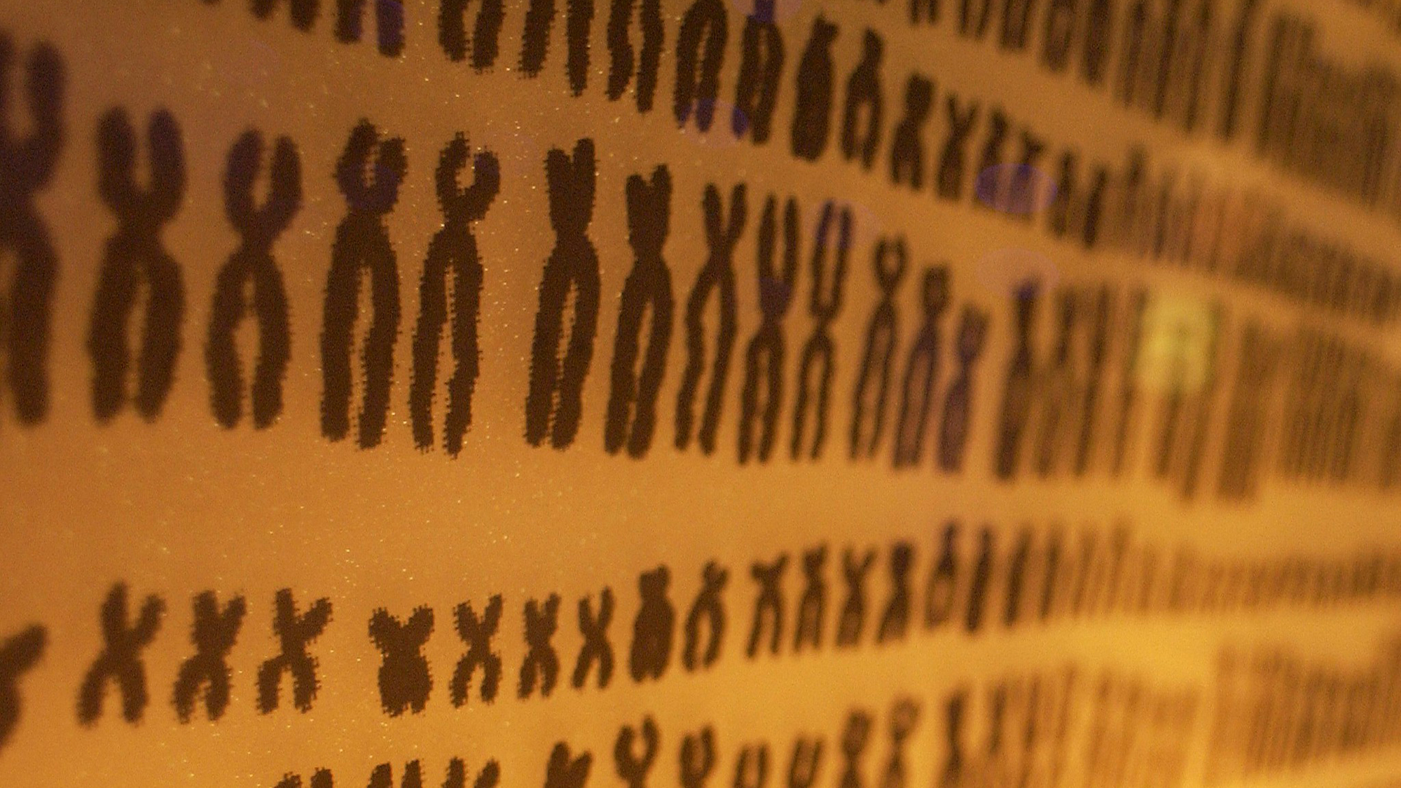 Women have two copies of chromosome X, while men have one X and one Y. This little Y chromosome holds the key to why men have higher risk of cancer. Photo by Kate Whitley CC-BY.
