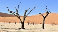Incrementos de aridez como los que se esperan por el cambio climático podrían alterar de forma brusca e incluso poner en peligro los ecosistemas en zonas áridas de nuestro planeta. | Imagen de Parsing Eye en Unsplash.