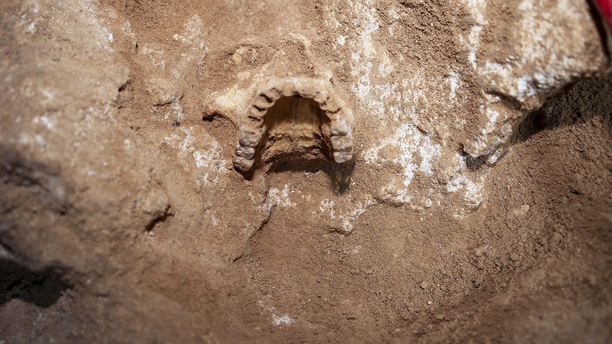 Imagen de la cueva 127 de Formentera. Crédito: Dr Edgard Camarós.