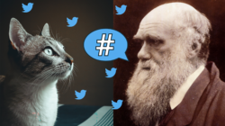 Cute cats and fake news can be found side by side on social media. The group led by Luc Steel at IBE tries to apply evolution concepts to analyse social media behavious. Image by First Create The Media.