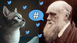 Se pueden encontrar fotos de gatitos, pero también noticias falsas en las redes sociales. El grupo dirigido por Luc Steels en el IBE intenta aplicar conceptos de evolución para analizar el comportamiento de las redes sociales. | Imagen de First Create The Media.