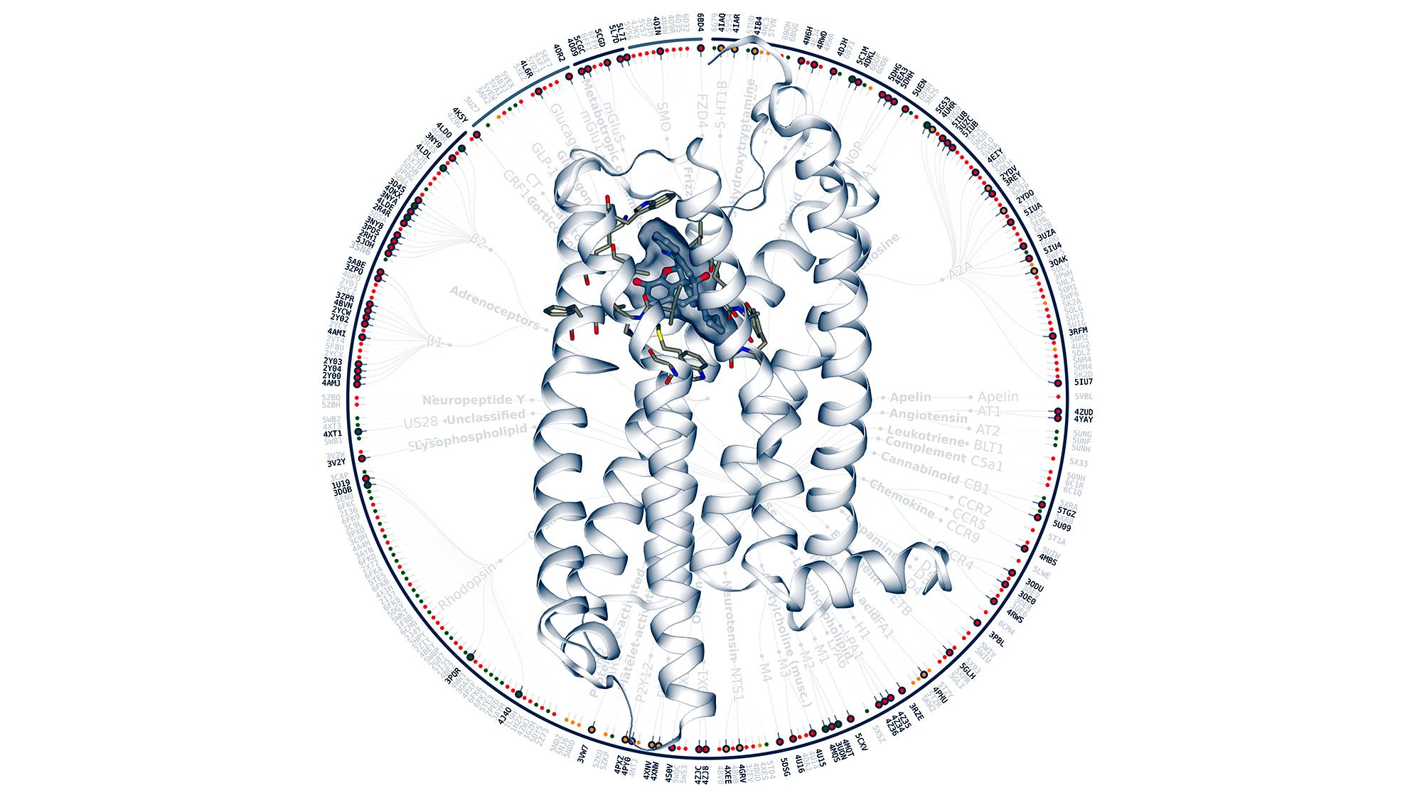Las GPCRs son diana de casi el 40% de los fármacos actuales. El equipo de Jana Selent ha liderado la creación de una plataforma que facilitza su estudio.
