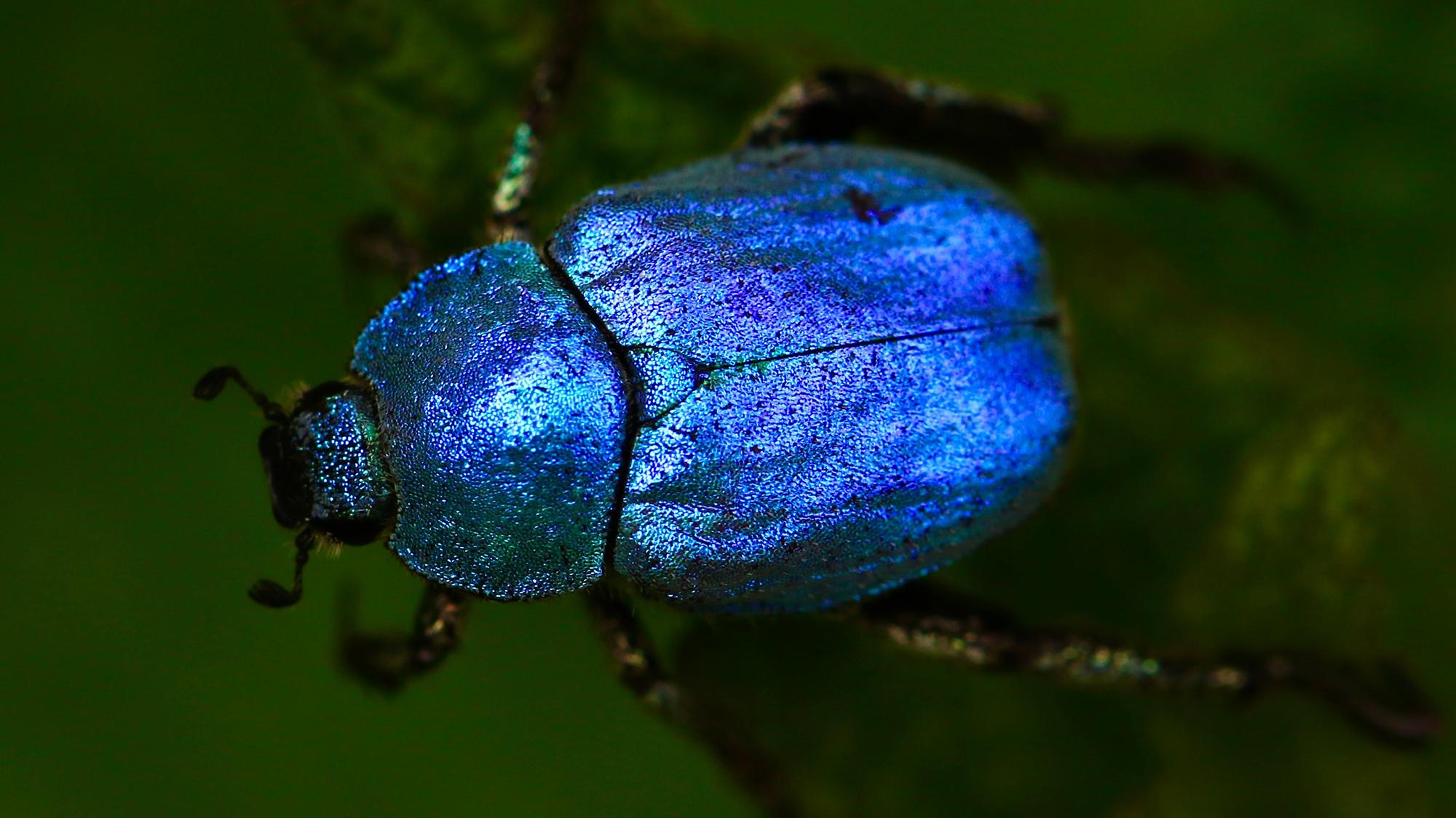 L'adaptabilitat dels escarabats a ambients salins podria ser útil per comprendre les conseqüències ecològiques del canvi climàtic. Foto de James Wainscoat per Unsplash