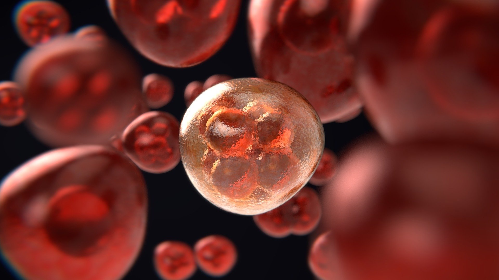 Scientists find a factor to reprogram and increase the number of blood stem cells